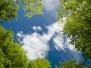 Gökyüzü-Ağaç-Çiçek