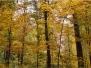 Ağaç-Yaprak