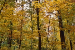 Ağaç-Yaprak 1