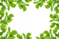 Ağaç-Yaprak 12