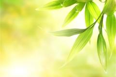 Ağaç-Yaprak 14