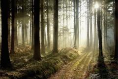 Ağaç-Yaprak 17