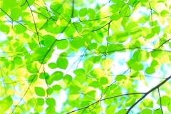 Ağaç-Yaprak 2