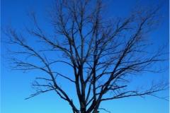 Ağaç-Yaprak 4