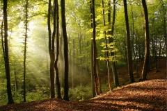 Ağaç-Yaprak 8