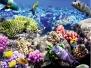 Akvaryum-Balık