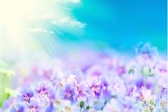 Çiçek 15