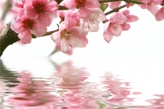 Çiçek 5