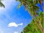Deniz-Palmiye