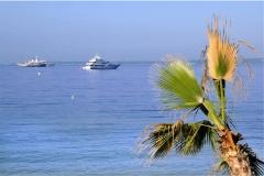 Deniz-Palmiye 2