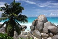Deniz-Palmiye 7