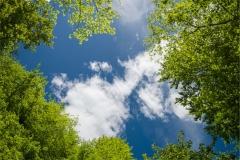 Gökyüzü-Ağaç-Çiçek 1