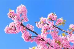 Gökyüzü-Ağaç-Çiçek 10