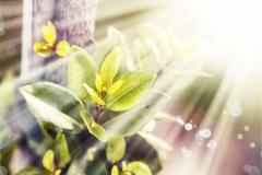 Gökyüzü-Ağaç-Çiçek 11