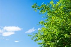 Gökyüzü-Ağaç-Çiçek 12