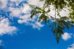 Gökyüzü-Ağaç-Çiçek 16
