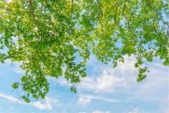Gökyüzü-Ağaç-Çiçek 18