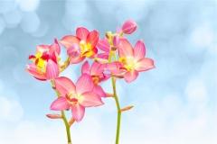 Gökyüzü-Ağaç-Çiçek 19