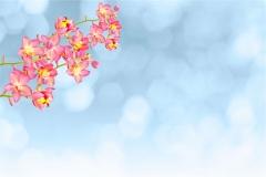 Gökyüzü-Ağaç-Çiçek 20