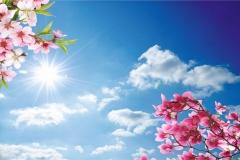 Gökyüzü-Ağaç-Çiçek 3