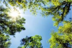 Gökyüzü-Ağaç-Çiçek 4
