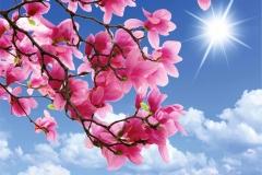 Gökyüzü-Ağaç-Çiçek 5