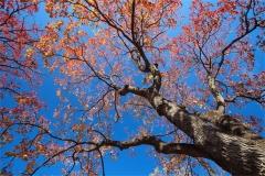 Gökyüzü-Ağaç-Çiçek 7