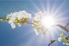 Gökyüzü-Ağaç-Çiçek 8