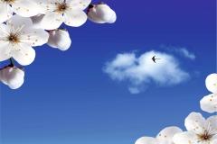 Gökyüzü-Ağaç-Çiçek 9
