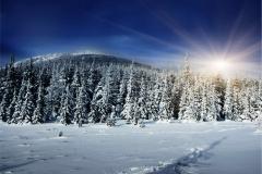 Kış 17