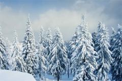 Kış 3