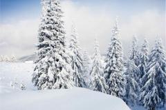 Kış 4