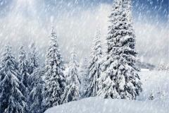 Kış 7